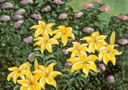 Francesca's Lilies