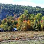 Lucy Farm. Foliage and Pumpkins